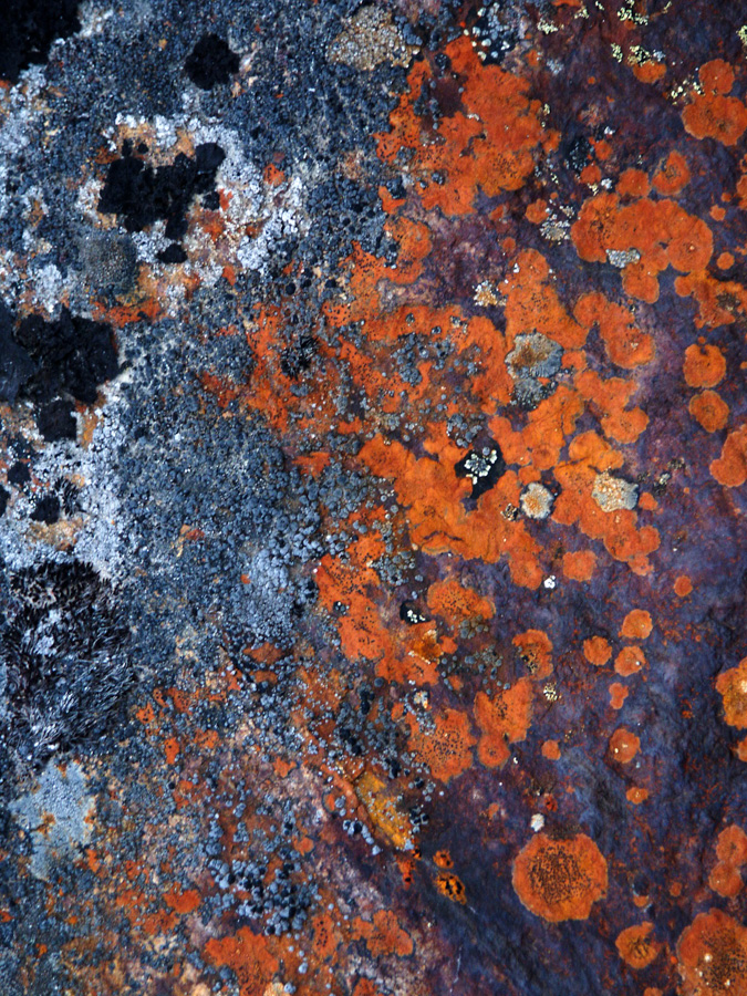 Lichen grows profusely on many rock surfaces. This prominent orange one is probably Sulphur Firedot (Caloplaca flavovirescens)