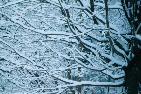 Snow-5412