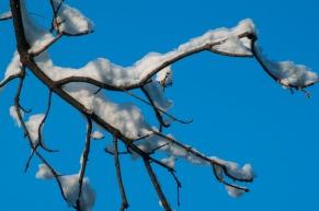 Snow-5417