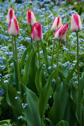 Spring green-6165