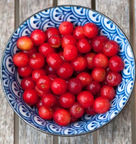 Cherry-3353
