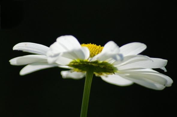Flower-0880