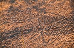 Dune-7347