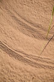 Dune-7371
