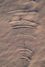 Dune-7375