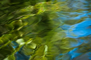When lines blur, other patterns can be revealed, like the reflections of a tree in the water.
