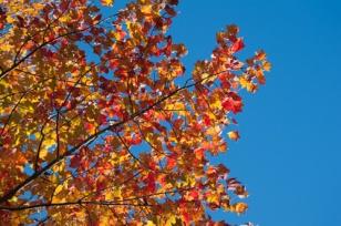 Fall-9021