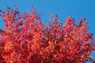 Fall-9034