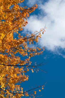 Fall-9046