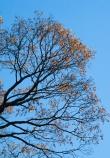 Tree-9043
