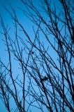 Tree-9231