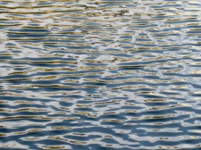 Ripple patterns in the Conservatory Water of Central Park....