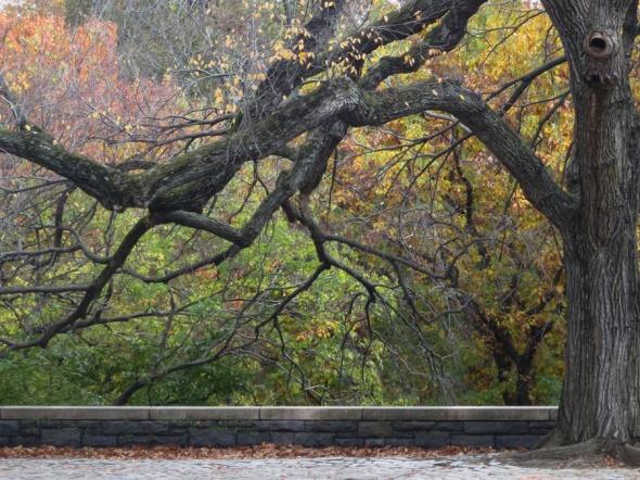 Tree-1555