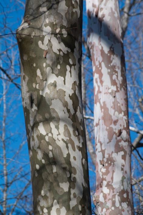 tree-4675