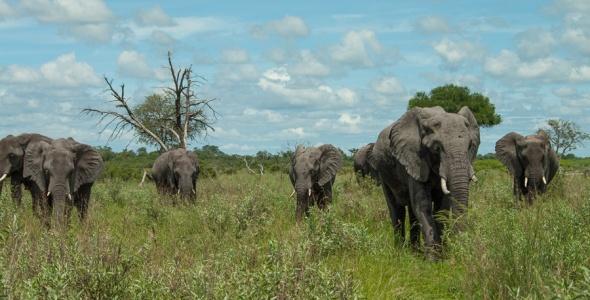 Africa-4239
