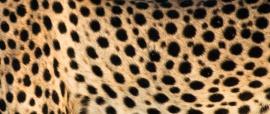 Africa-5895