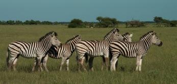 Africa-6119