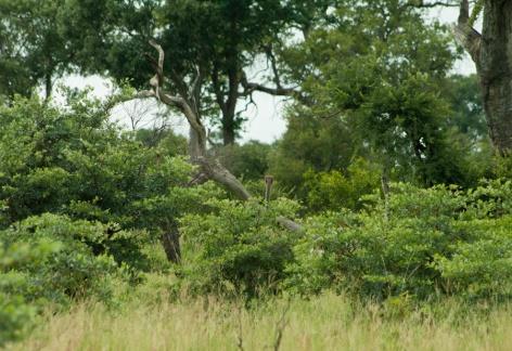 Africa-3658