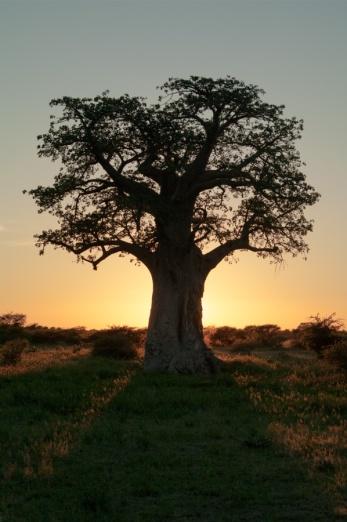Africa-5942