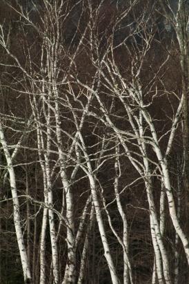 Tree-6549