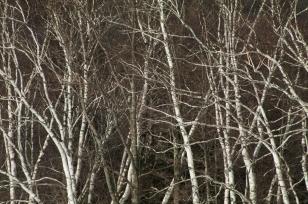 Tree-6551