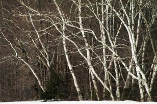 Tree-6554