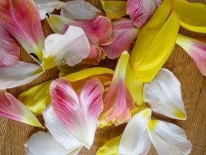 Tulip-2006