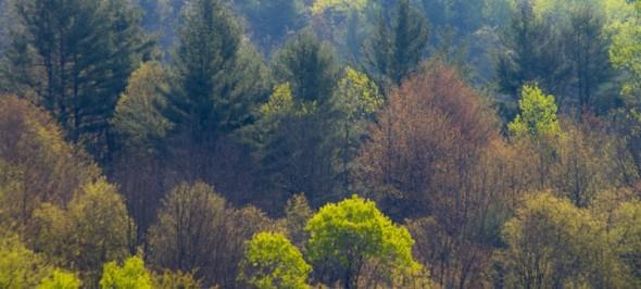 cropped-spring-4878.jpg