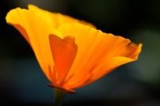 Flowers-7022