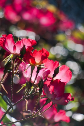 Flowers-7026