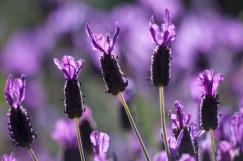 Flowers-7057