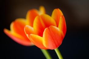 Spring-6879