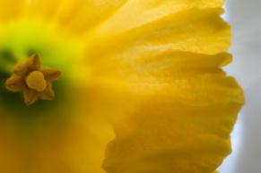 Flower-7497