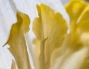 Flower-7516