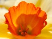 Flower-7517