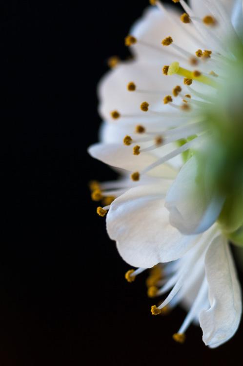 Flower-7518