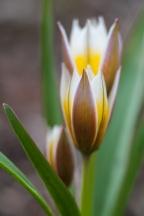 Flower-7593