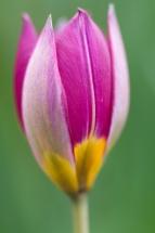 Flower-7597