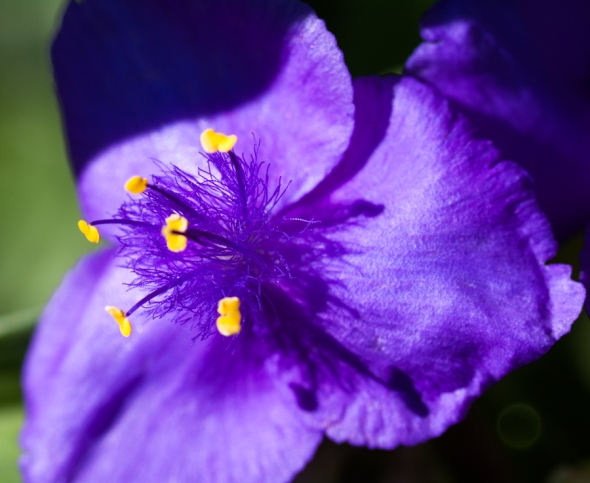 Garden-5966