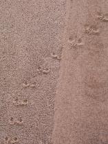 Dunes-9333