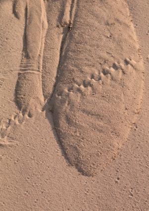 Dunes-9709