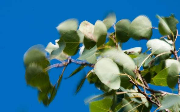 Leaves-0617