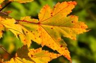 Fall-1288