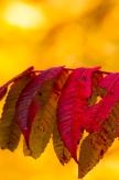 Fall2014-2229