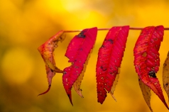 Fall2014-2230