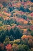 Fall2014-2291