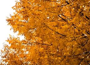 Fall2014-2407