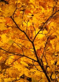 Fall2014-2408