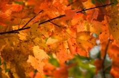 Fall2014-2410