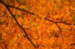Fall2014-2413